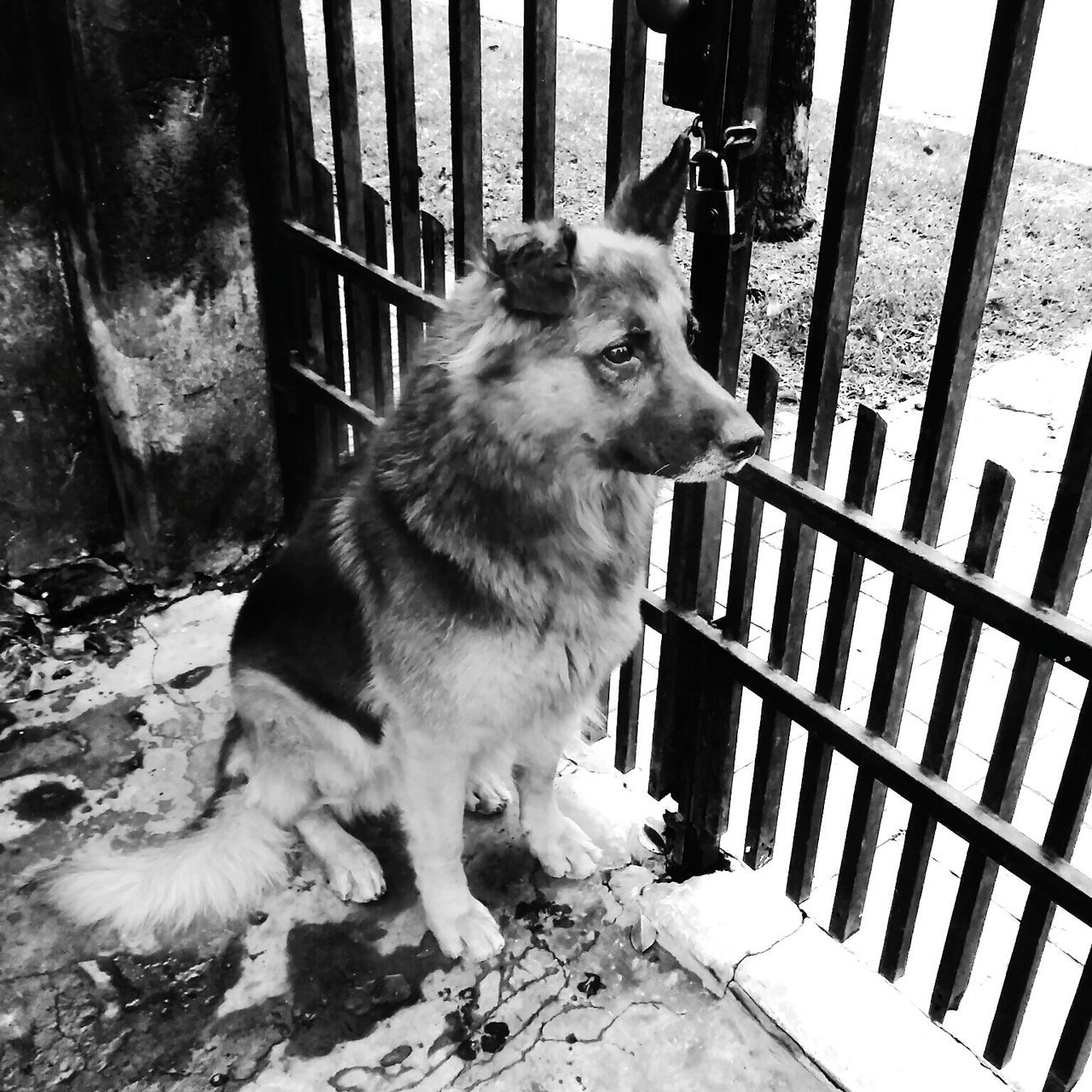 domestic animals, animal themes, pets, dog, one animal, railing, mammal, no people, day, outdoors, close-up
