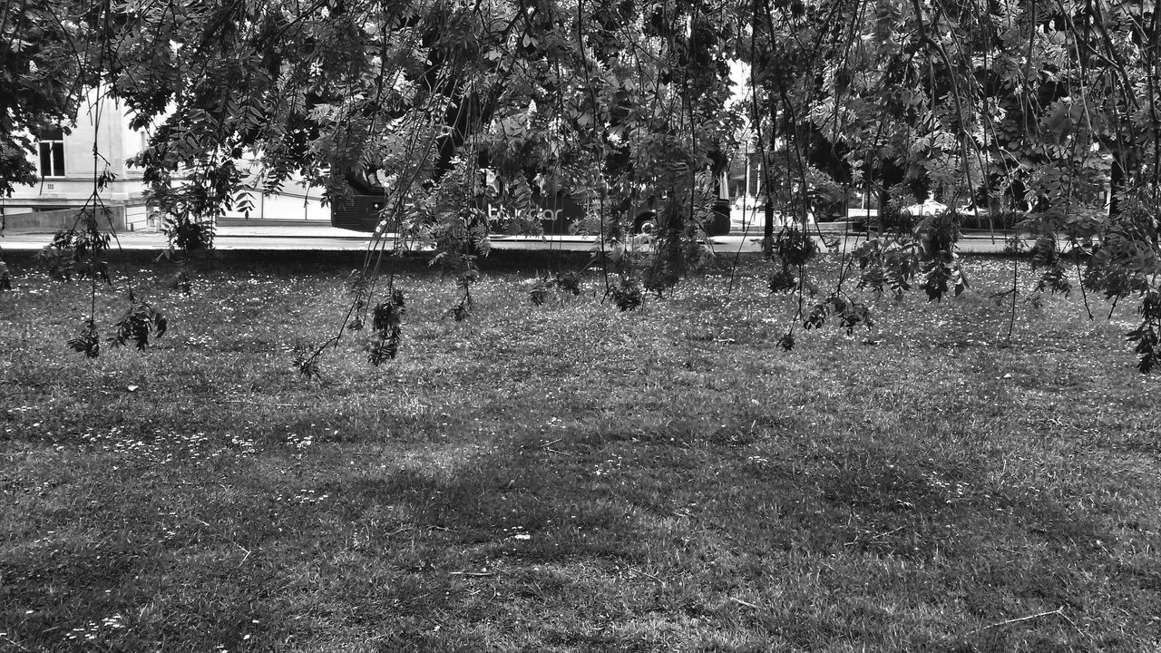 Bus. Trees City Park Nature Growing Abstract Patterns Environment Bus Hidden Monochrome Monochromatic Black And White Photography