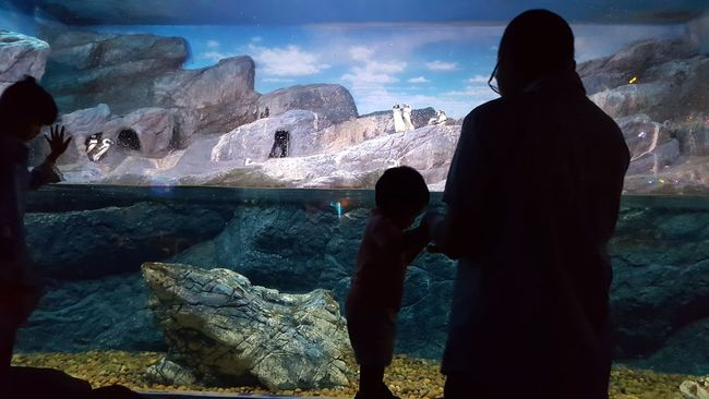 Father And Son Father & Son Sea Life Aquarium Audience Funtimes Relationship Bonding Time Adventure Buddies Holding Hands Cliff Climbing Penguins Underwater