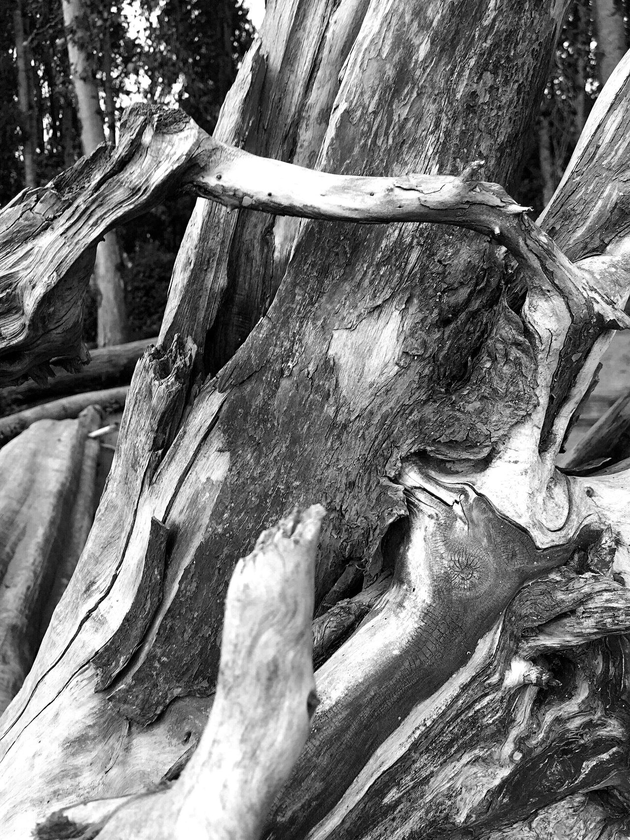 Abstract Nature Textures And Surfaces Landscape Photography Earth Porn Still Life Blackandwhite Photography Landscape #Nature #photography Abstractions Sunset #sun #clouds #skylovers #sky #nature #beautifulinnature #naturalbeauty #photography #landscape Beach Photography Views Perspective Nature Shapes In Nature  Landscape_photography Nature Photography Inside Driftwood Black And White Tree Porn Driftwood Black & White Patterns In Nature Patterns & Textures Blackandwhite