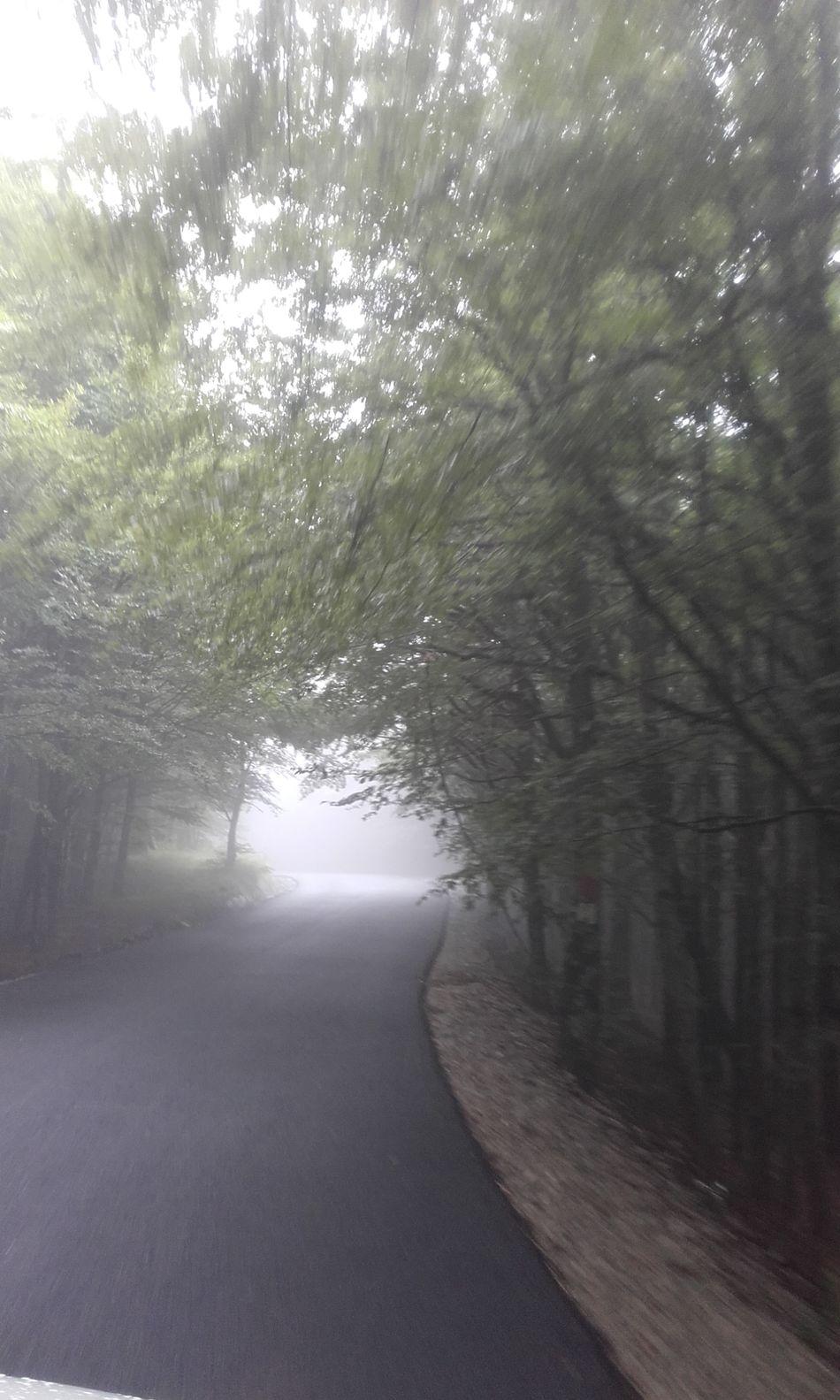 Foggyroad Beautiful Day Romania Cheia First Eyeem Photo