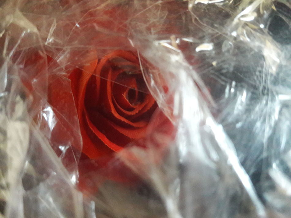 """The Wrinkles of a Rose"" Close-up Textured  Old Age Get Older Age Wrinkles Beauty Conceptual Social Symbolic  Symbol Transparent Bright Glossy Brightness Woman Desktop Orange Red Matt EyeEmNewHere"