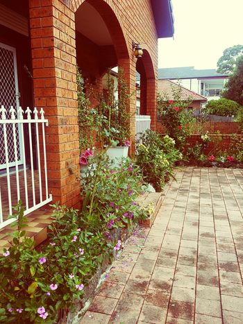 Myhome Garden Flowrrs And Plants Bighouse