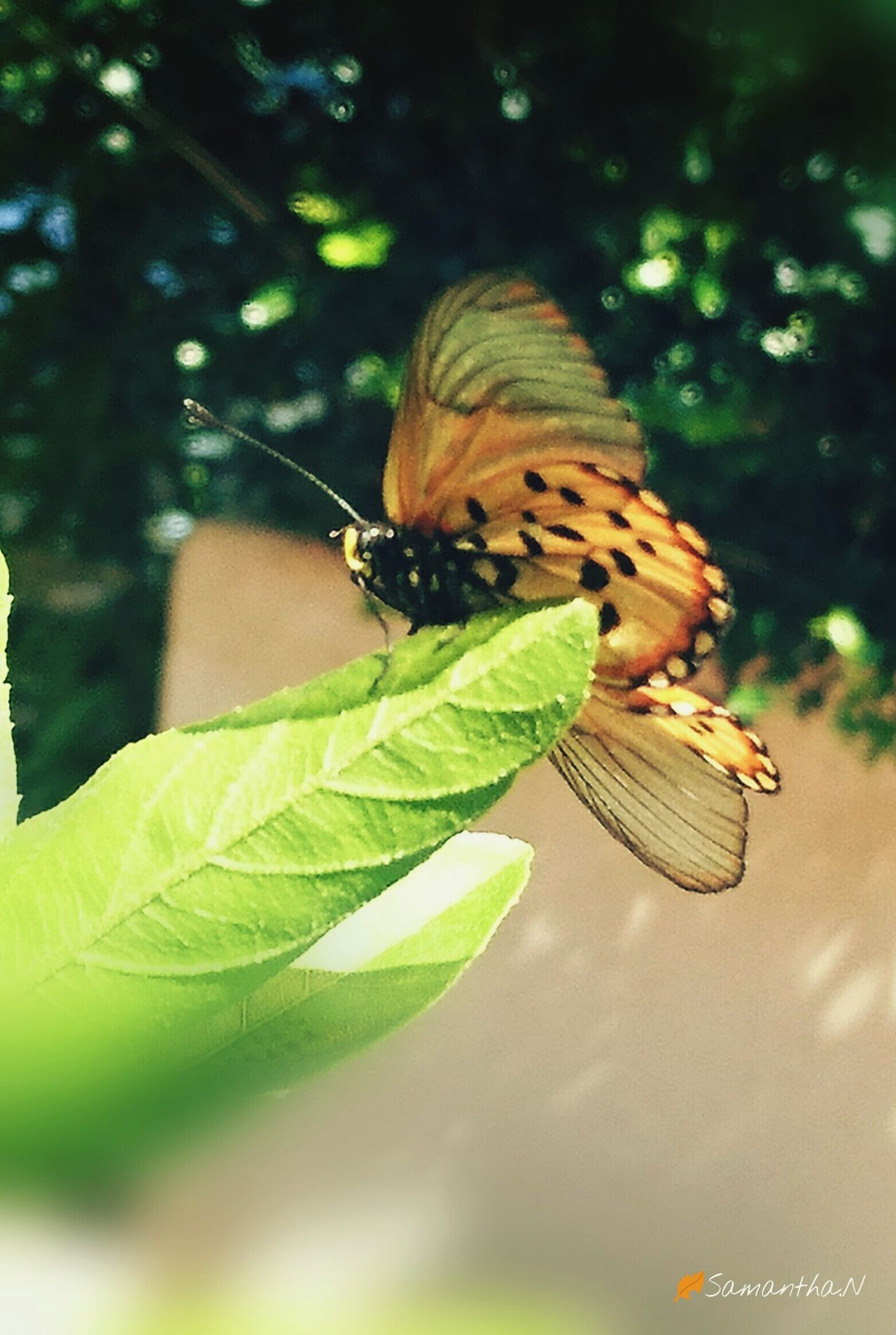 Butterfly - Insect Close-up Leaf Butterfly Nature Outdoors Beautiful Day Insect Beautiful Wings Inthemoment Wings Open Colour Of Life Taking Photos Love To Take Photos ❤ Naturecollection