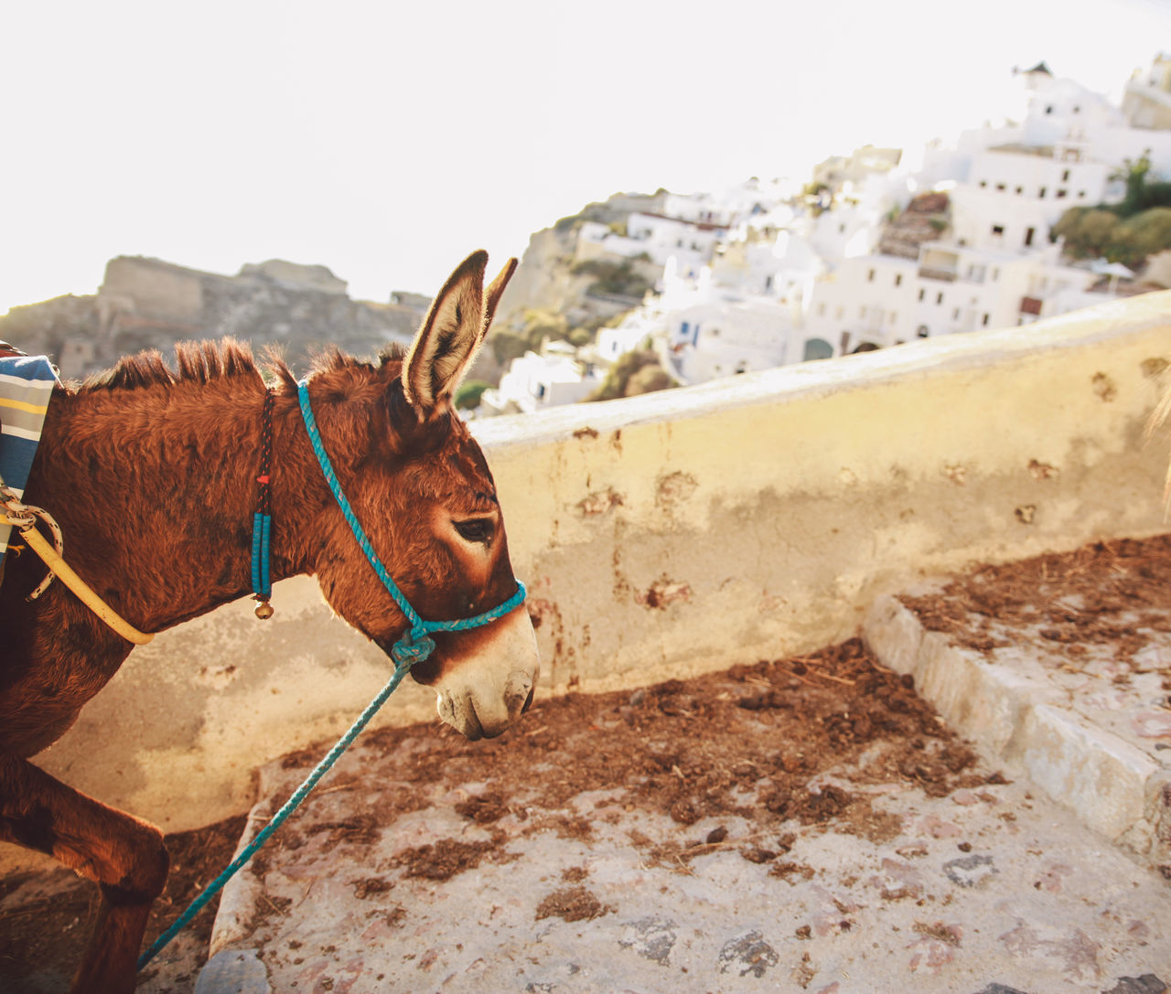 Beautiful stock photos of greece, Animal Dung, Animal Themes, Architecture, Building Exterior
