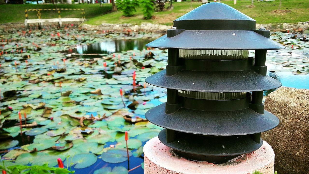 Lilies in summer Lilies In Bloom Lilies Forever... Lily Pad Lily Summer Vibes EyeEm Nature Lover Green Green Green!  Lamp Post Live For The Story Nature Photography