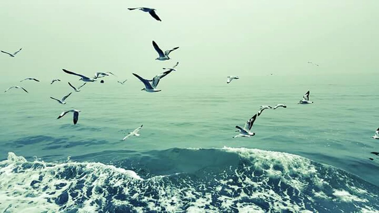 Traveling Travel Photography Sea And Sky Seagull Sea_sky_nature Bird Photography Birdwatching Wings Mobile Editing PhonePhotography Deck View Launch Journey Going To Coral Island Holiday Enjoying Nature Blue Wave