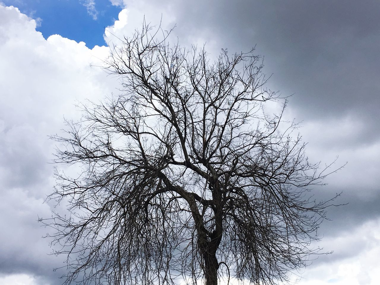 Bare Tree Sky Low Angle View Tree Cloud - Sky Nature Branch No People Outdoors Tranquility Beauty In Nature Day Scenics