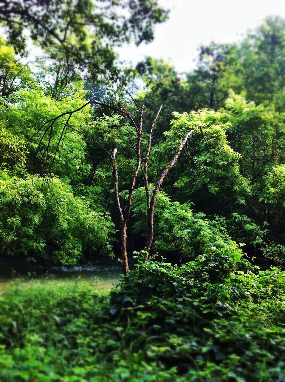 growth, nature, green, tree, plant, green color, beauty in nature, tranquility, outdoors, day, no people, foliage