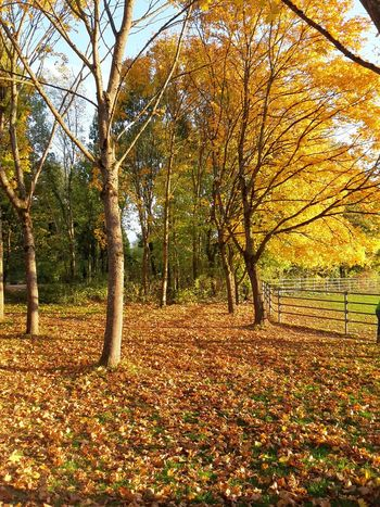 Autumn🍁🍁🍁 Beauty In Nature Outdoors Tree Wood Nature Autumn Colours