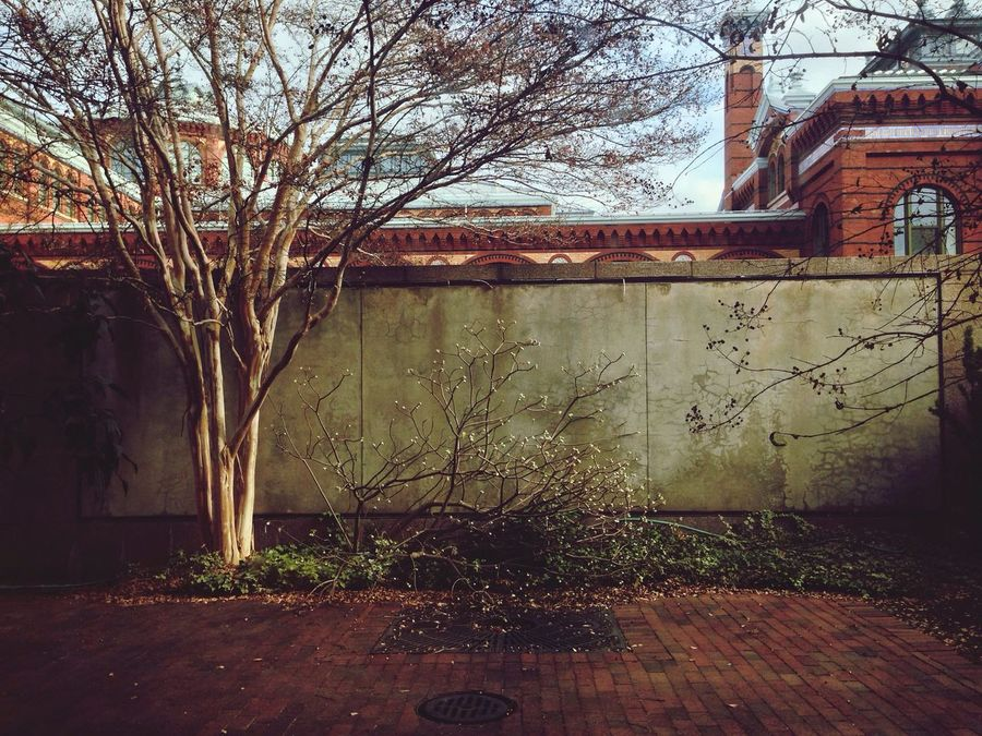 The greatest gift of the garden is the restoration of the five senses ~ Hanna Rion Garden Smithsonian Washington DC Wall Trees