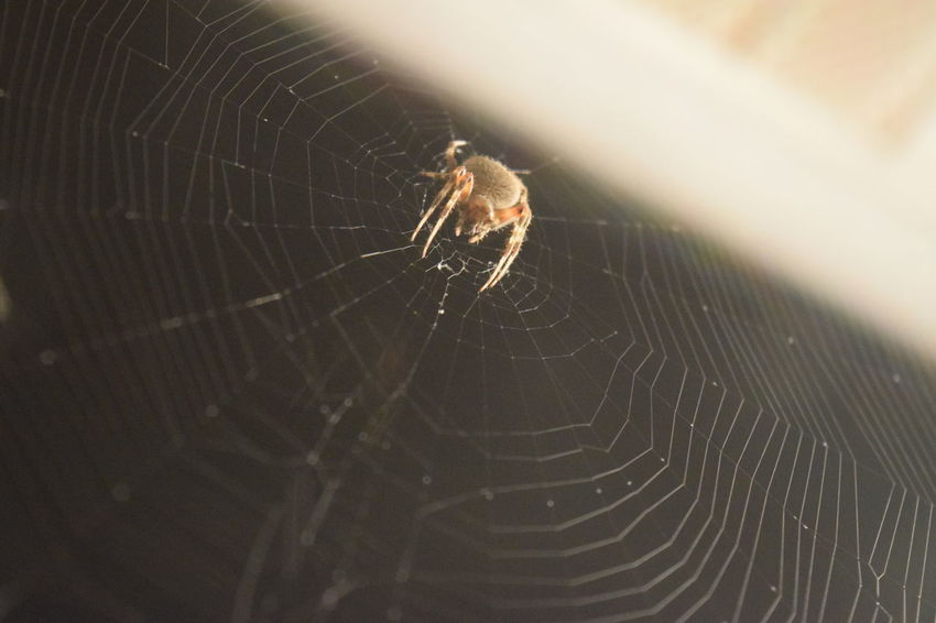 Spinning a masterpiece Spider Web Spider Web Intricacy Fragility Nature Close-up Concentric Eight Legs Arachnid No People Fascination Nature Perspectives On Nature
