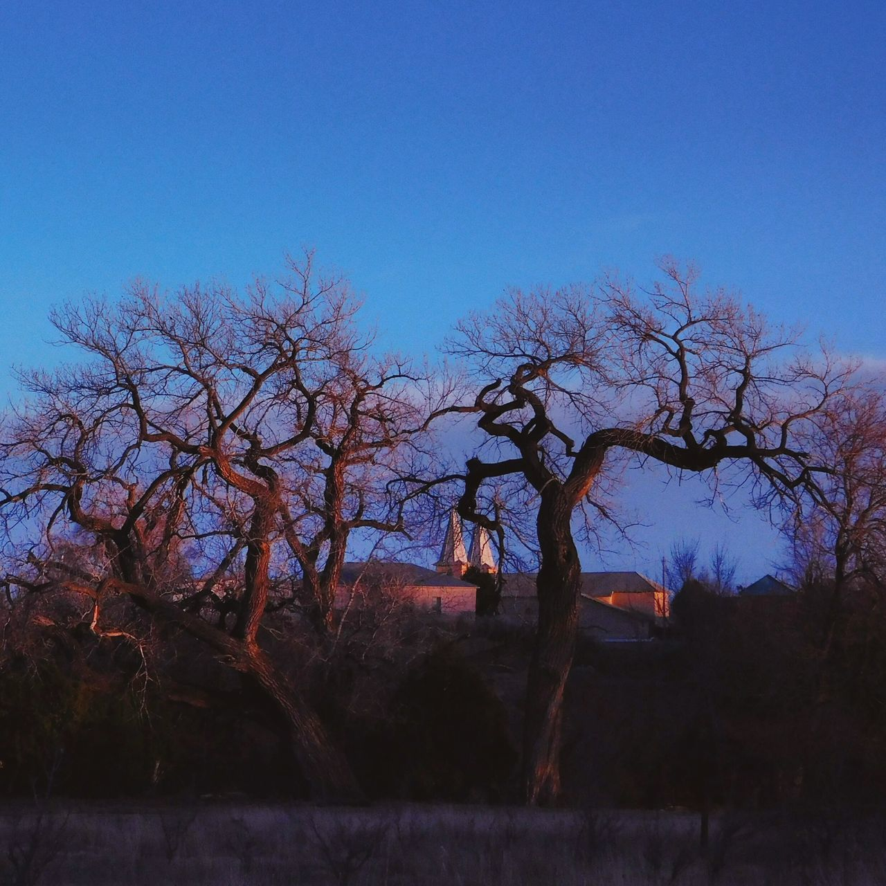 Blue Tree Sky Silhouette Rural Scene NewMexicoTRUE Newmexicoskys Newmexicophotography Newmexicoskies