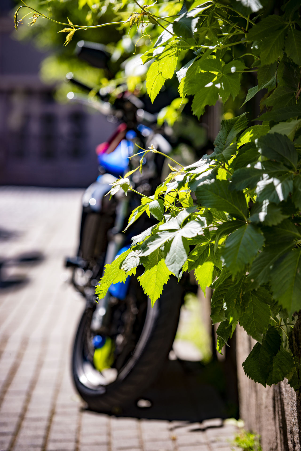 Bicycle City Close-up Cycling Day Flower Freshness Growth Latvia Nature No People Outdoors Riga Street Sunlight