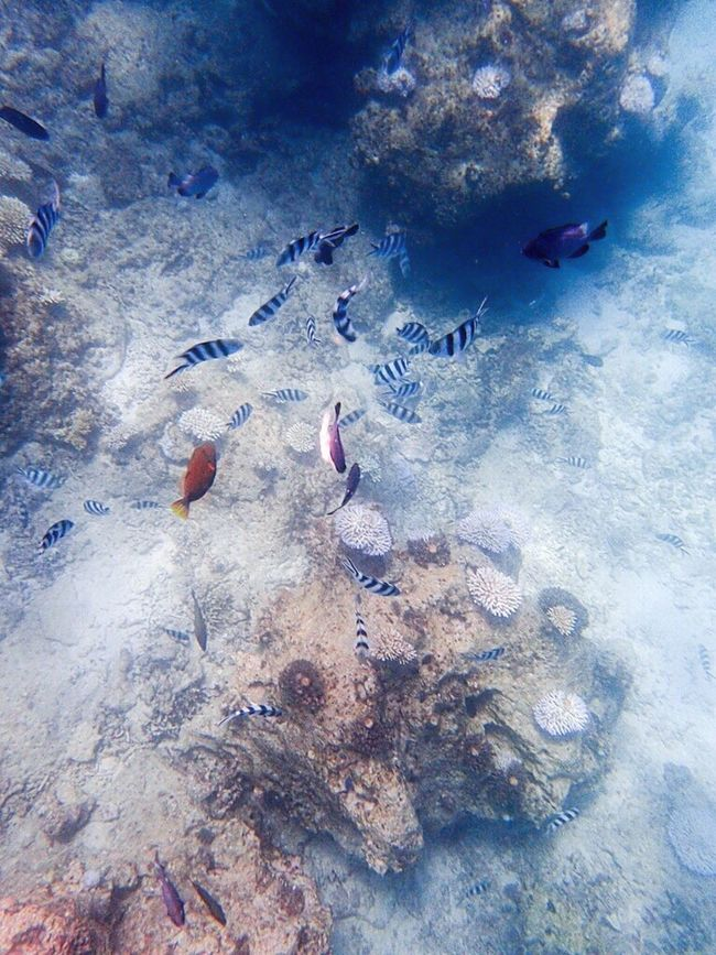 Underthesea Snorkelling Sea Ocean Fish Nature Photography EyeEm Nature Lover Underwater Photography Naturelovers Diving Enjoying Life Japan Okinawa Summer Nature Is Art Blue Colors Of Nature Color Of Life