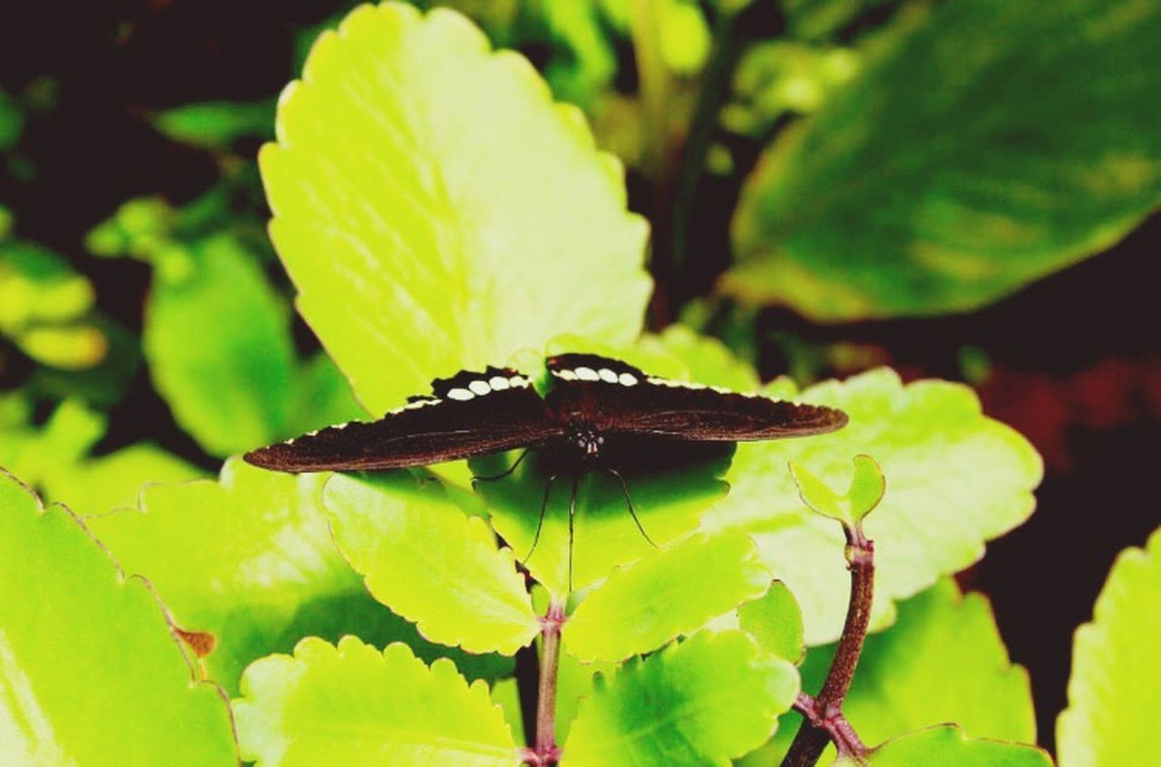 Insect Close-up Plant Nature Fragility Beauty In Nature Springtime Butterfly Leaf Launchpad