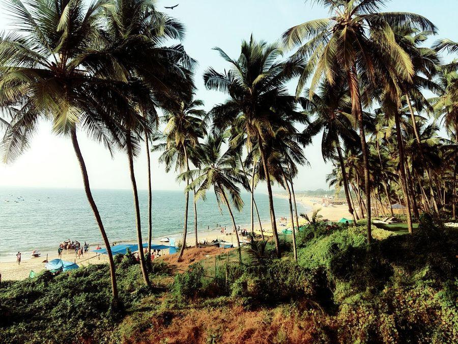 At Sinquerimbeach , Goa. India Nature Beach and Trees