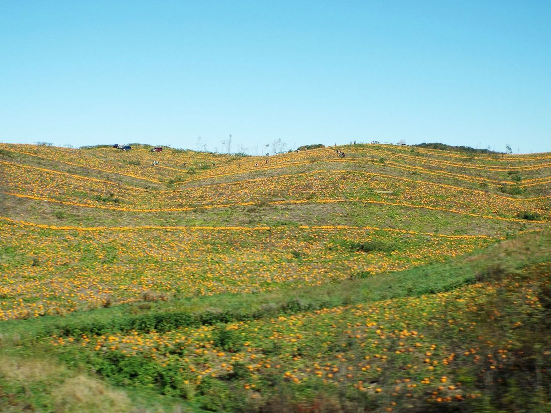 A Pumpkin Mountain near Whyte West Virginia Westvirginia West Virginia Photography West Virginia Scenery Fall Halloween Landscape_photography