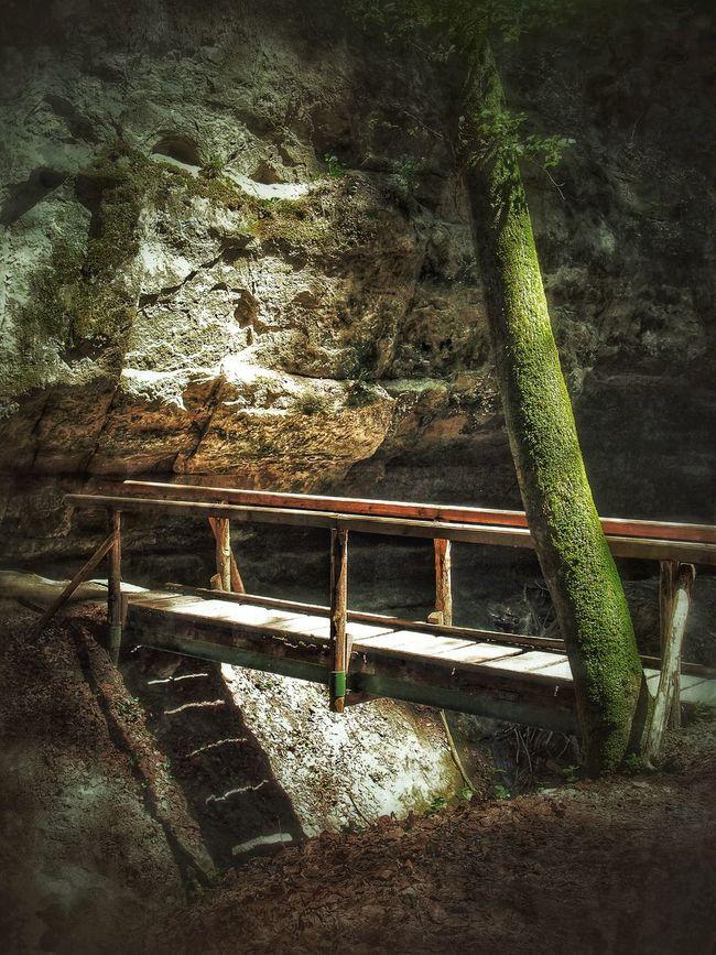 Brücke Wald Wood Wood Art Bridge Landscape_photography Taking Photos