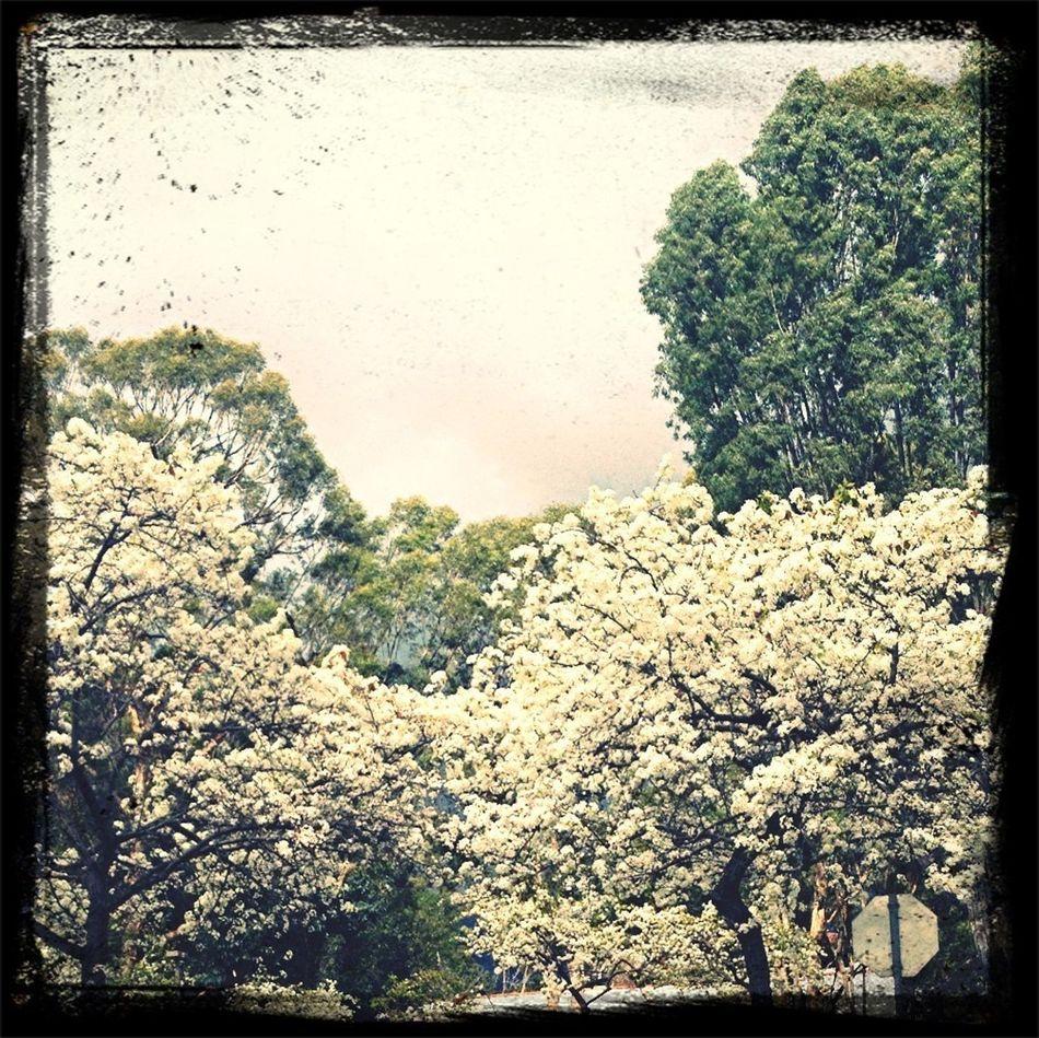Trees. White Flower.