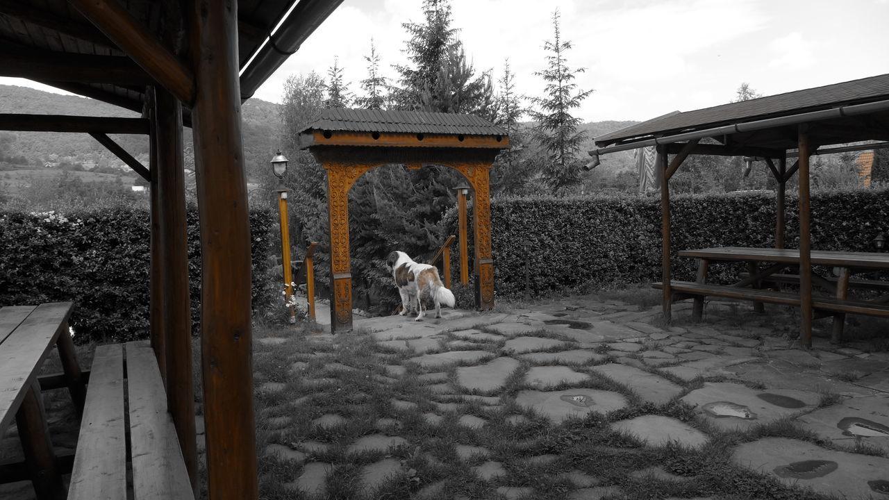 Bench Benches Dog Garden Gardens Gate Hargita St. Bernard St. Bernard Dog St. Bernardus Szekely Gate Watchdog