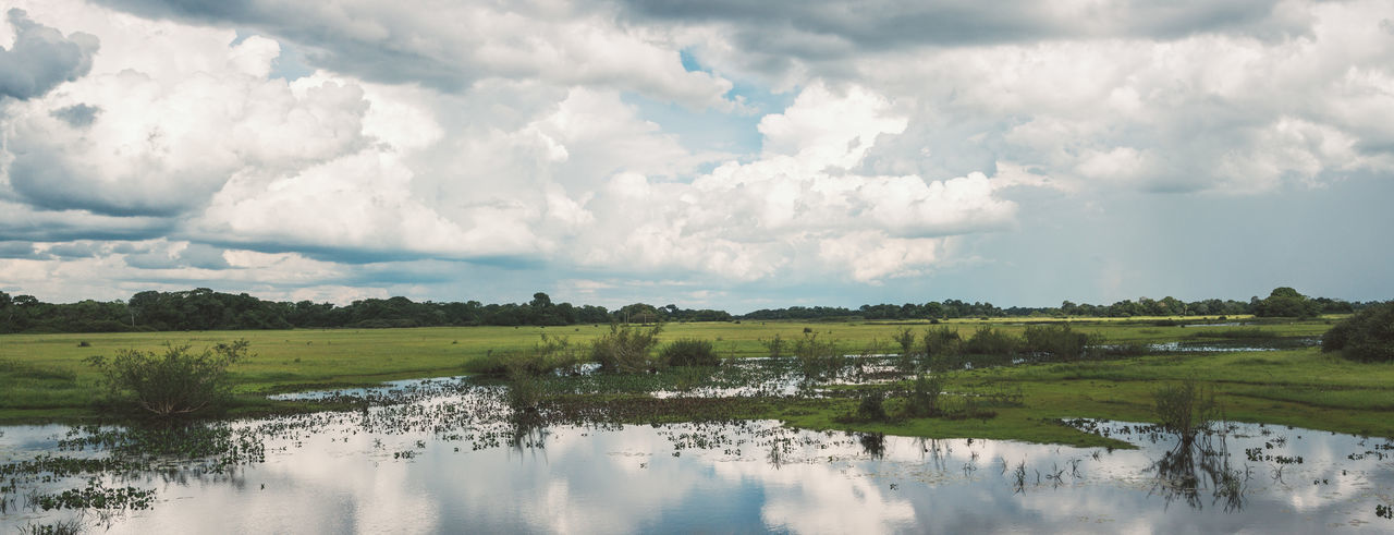 The biggest tropical wetland area on earth. Cloud - Sky Cloudy Day Grass Green Color Landscape Moody Sky Nature Nature Photography Panorama Panoramic Plant Plants Reflection Scenics Sky Swamp Tranquil Scene Tranquility View Water Water Reflections Wetland Wildlife Wildlife & Nature The Great Outdoors - 2017 EyeEm Awards