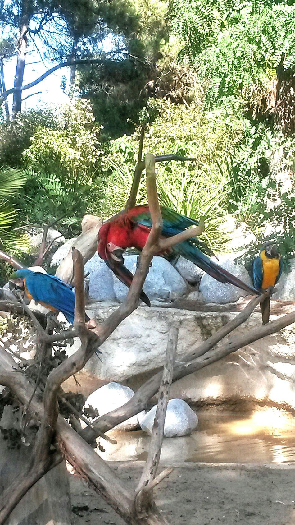 Parrots Birds Colorful Nature Zoo
