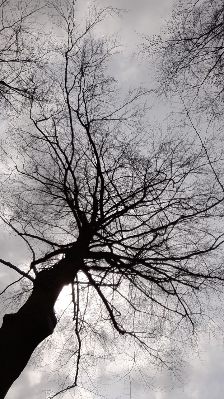 bare tree, tree, branch, nature, silhouette, beauty in nature, low angle view, sky, tranquility, outdoors, no people, day, lone, dead tree