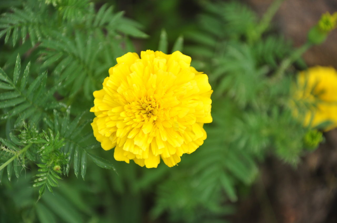 Unknown Yellow Flower Beauty In Nature Flower Flower Head Nature Photography Nature Photography EyeEm Best Shots Outdoors Petal Philippines Plant Yellow Yellow Color Yellow Flower