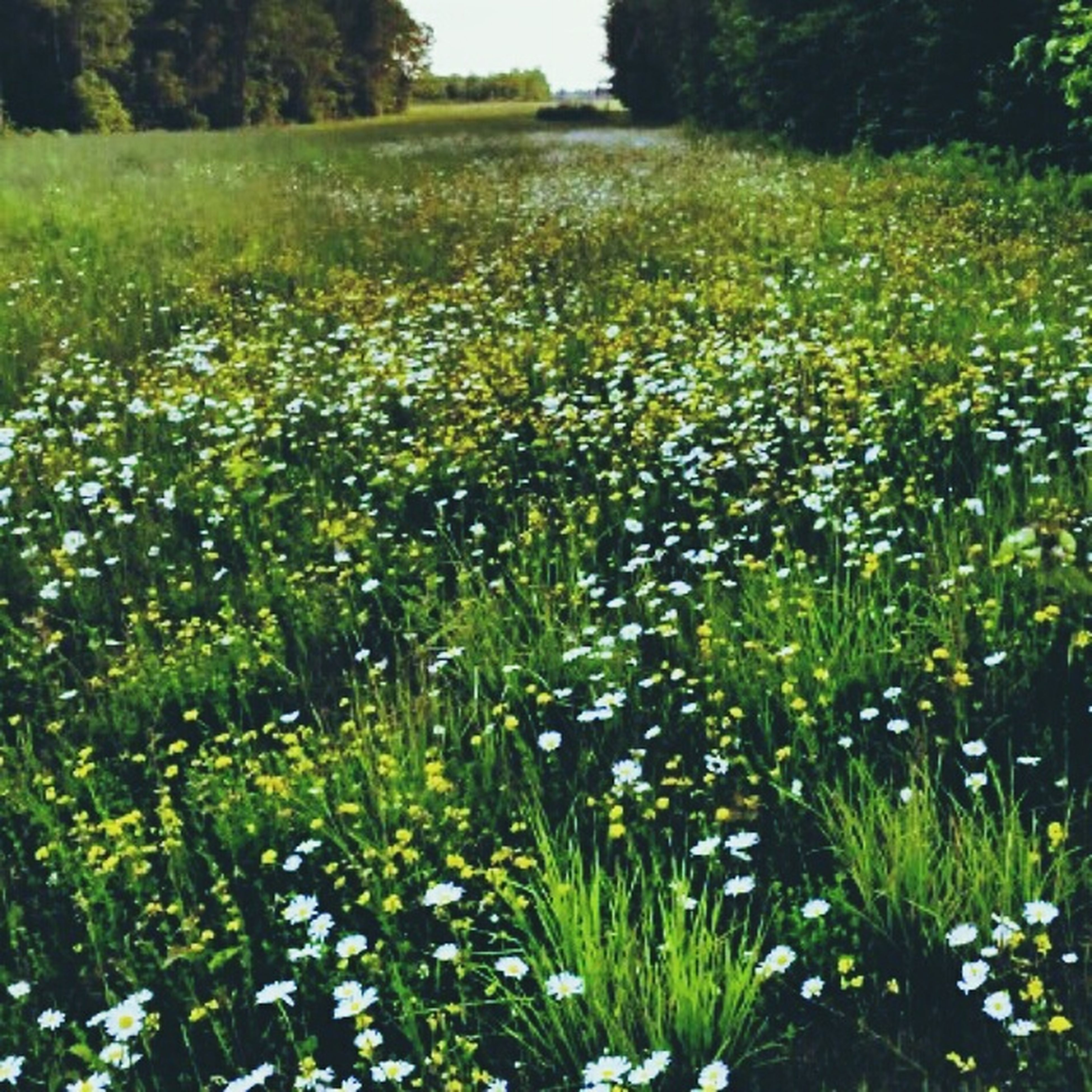flower, growth, freshness, beauty in nature, field, plant, nature, fragility, green color, grass, blooming, tranquility, tranquil scene, in bloom, petal, wildflower, landscape, sunlight, day, outdoors