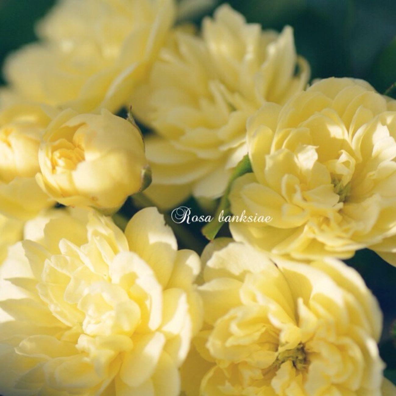 Japan EyeEm 2015 TAMROM Nikon D5200 庭に咲く花 Flower 花 Cute Happy Roses