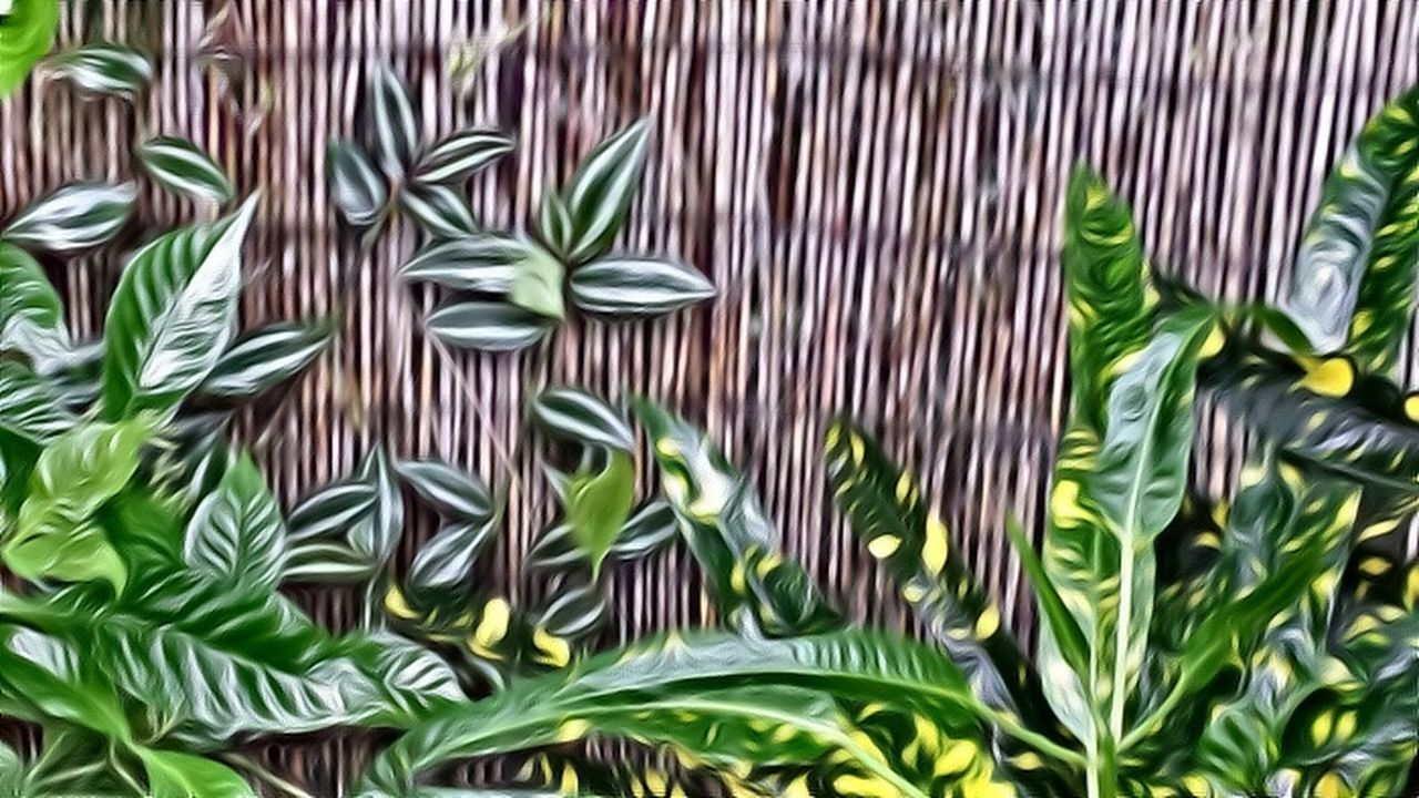 Simple Beauty Backyard Plants Bamboo Fence Greens And Browns sorry y'all but I love this edit. I always wished I could paint. Splash Of Yellow can you spot the invasive plant? more about that later