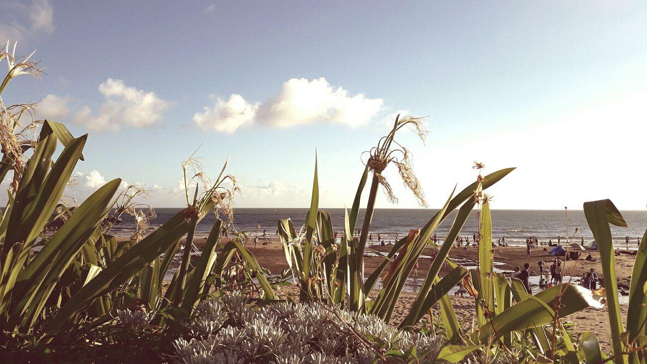 花 海 海灘 天空 藍天 スカイ☁⛅ ブルー うみ Sky Blu Sky Ocean Flower