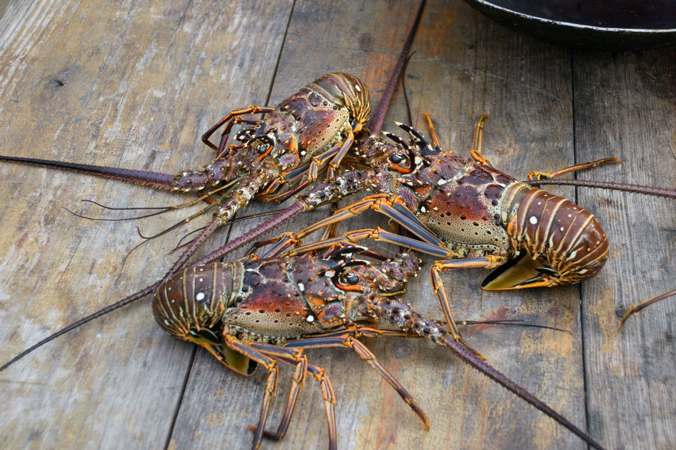 Beautiful stock photos of lobster, Animal Themes, Animal Wildlife, Animals In The Wild, Day
