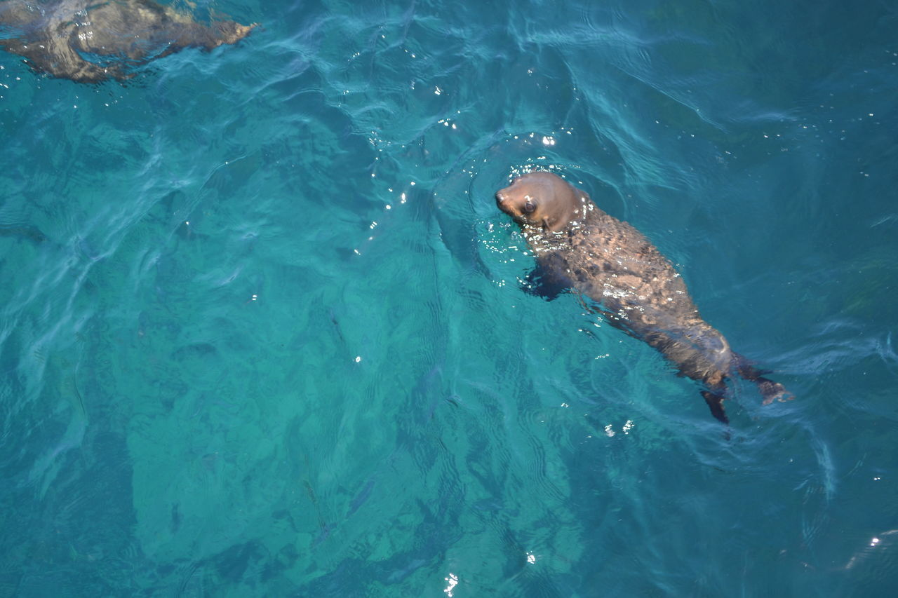 caught this photo of a seal playing in the water! Animal Themes Animal Wildlife Animals In The Wild Day Fish High Angle View Mammal Nature No People One Animal Outdoors Sea Sea Life Seals Chilling Seals On Beach Seals On The Sea Shore Swimming Water Waterfront