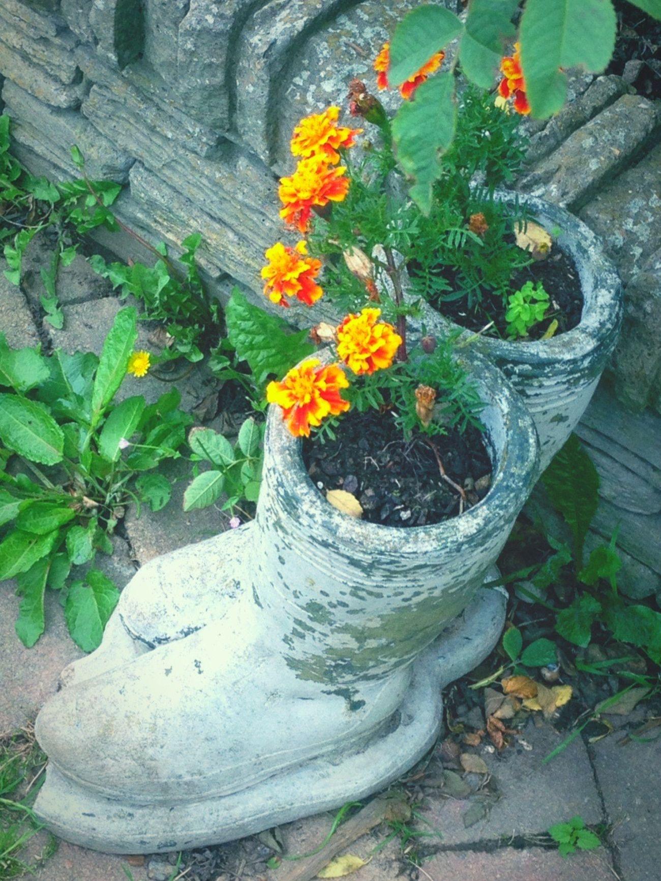 Flower Plant Growth Potted Plant Orange Color Flower Pot Nature Botany Cement Wellington Boots