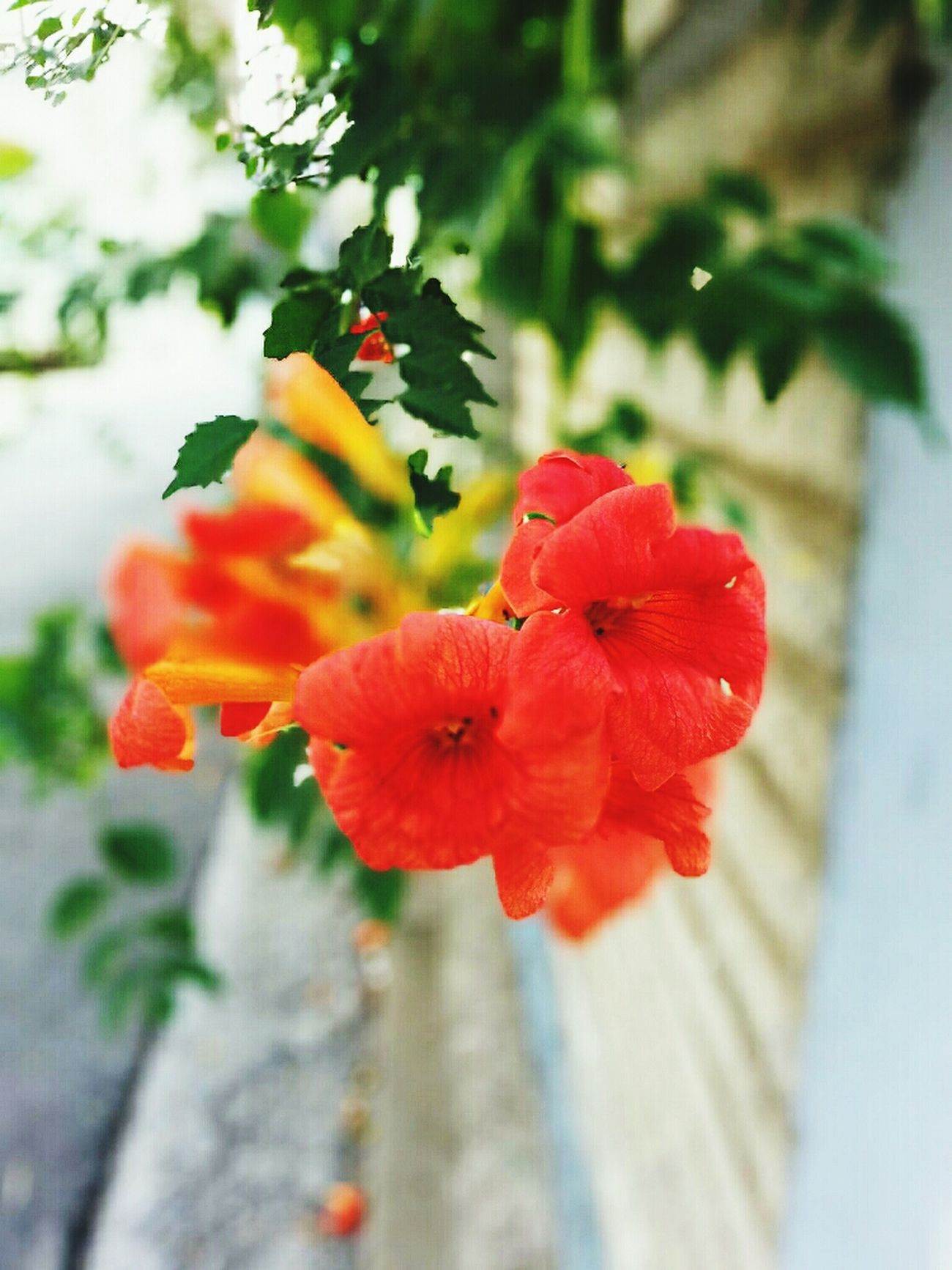 Morning Gloy Summer Flower Good Afternoon @korea seoul gui-dong / apple ipad2