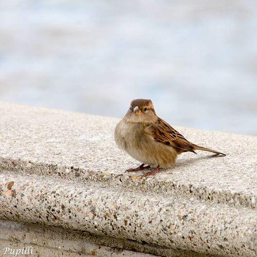 Winter Bird Igersitalia Igerstuscany Igerslivorno Photooftheday Italy Lastdayofyear Goodbye2015