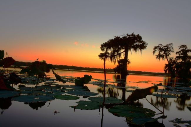 Louisian Swamp BatonRouge