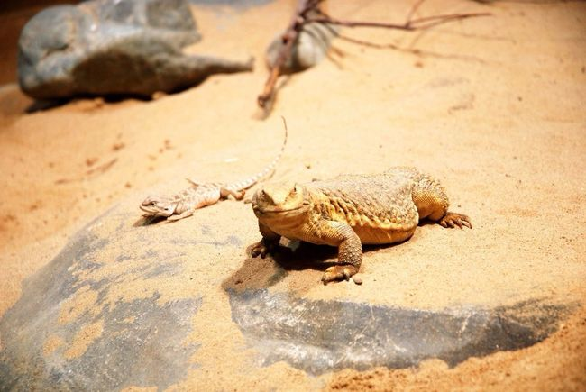 Lizard Lizzard Zoo Hi! Check This Out Animals