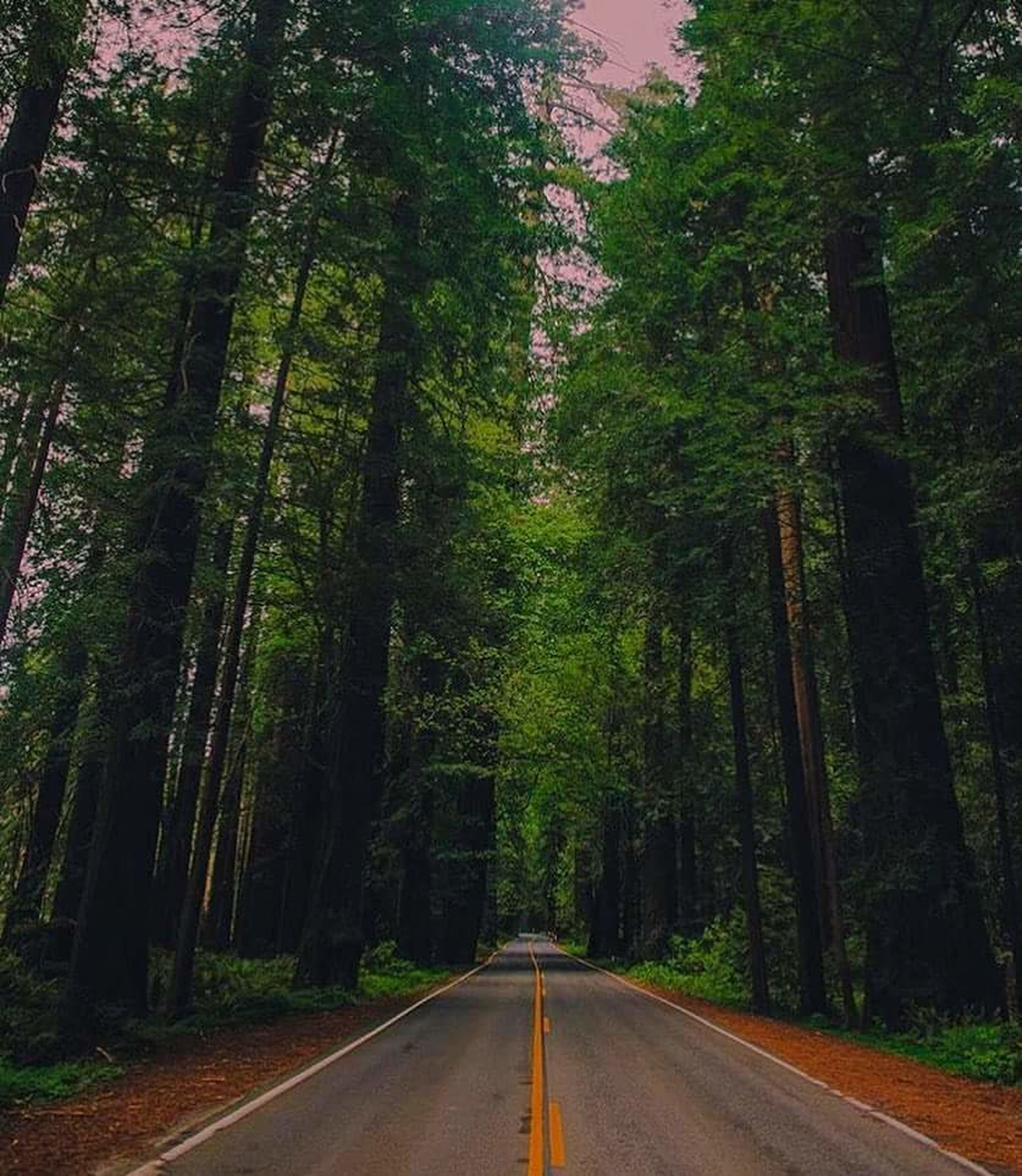 tree, the way forward, diminishing perspective, forest, transportation, road, vanishing point, tranquility, growth, nature, tranquil scene, empty road, green color, beauty in nature, scenics, lush foliage, no people, day, country road, woodland