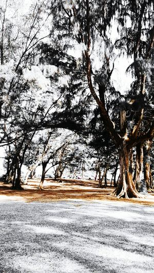Trees scape Trees Love Filters Black & White Hint Of Color Orange Kissed