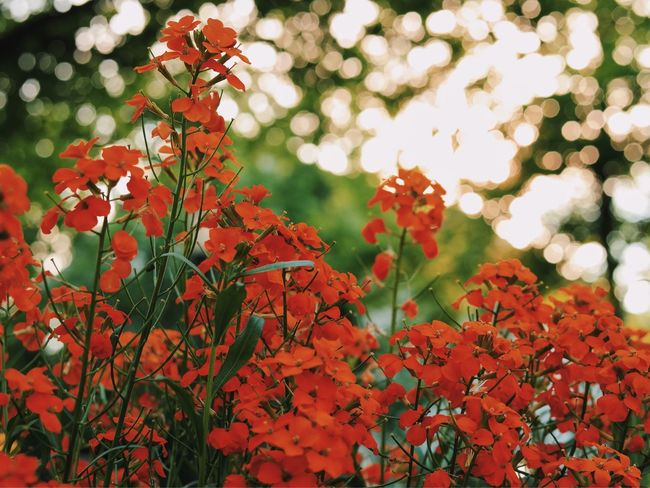 Red scent... Beauty In Nature Found On The Roll My Favorite Photo Vscocam Tranquility Red Flowers Fragility Selective Focus Focus On Foreground Garden Wildflowers Nature Bokeh Lights Natural Light Enjoying Life Close-up Close Up Botany Colour Of Life What's On The Roll Home Is Where The Art Is Color Palette