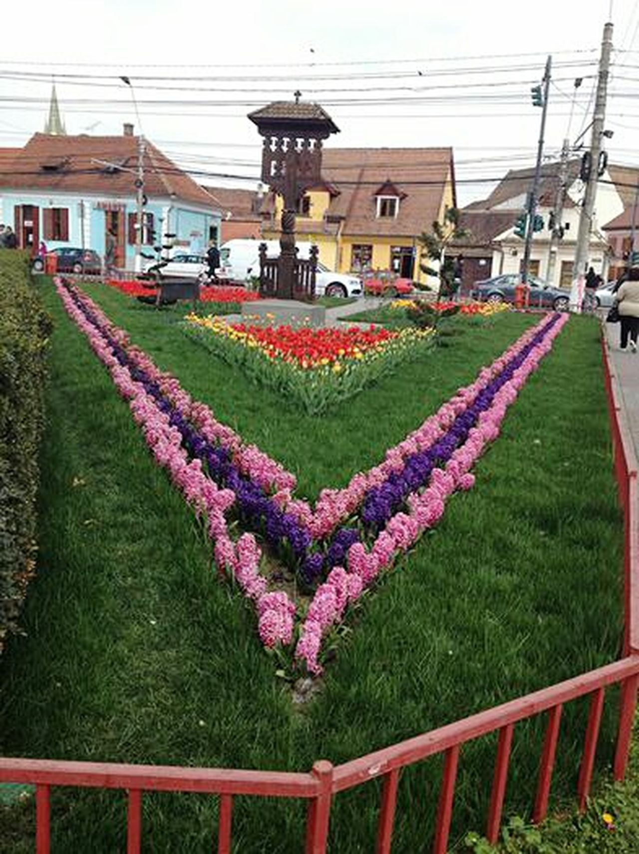 Flower Grass Flowerbed Plant Building Exterior Architecture Built Structure City Sky Outdoors Nature No People Freshness Day Medias Romania Hyacinths Hyacinths And Tulips