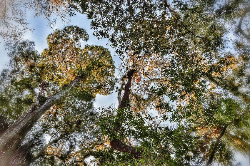 Trees Sky Nature Escaping Taking Photos