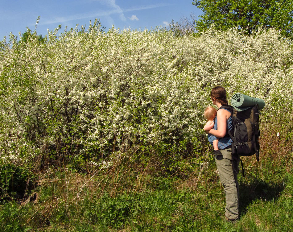 Backpacking is great - even with a little baby! Baby Baby Sling Baby Wrap Babywearing Backpacking Bonding Bush Carefree Childhood Children Day Family Flowering Hiking Lifestyle Love Maternity Mom Mother And Son Motherhood Outdoors Parenting Sling Spring Woman