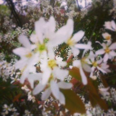 Flowers Spring Spring2014 Kingsheathpark