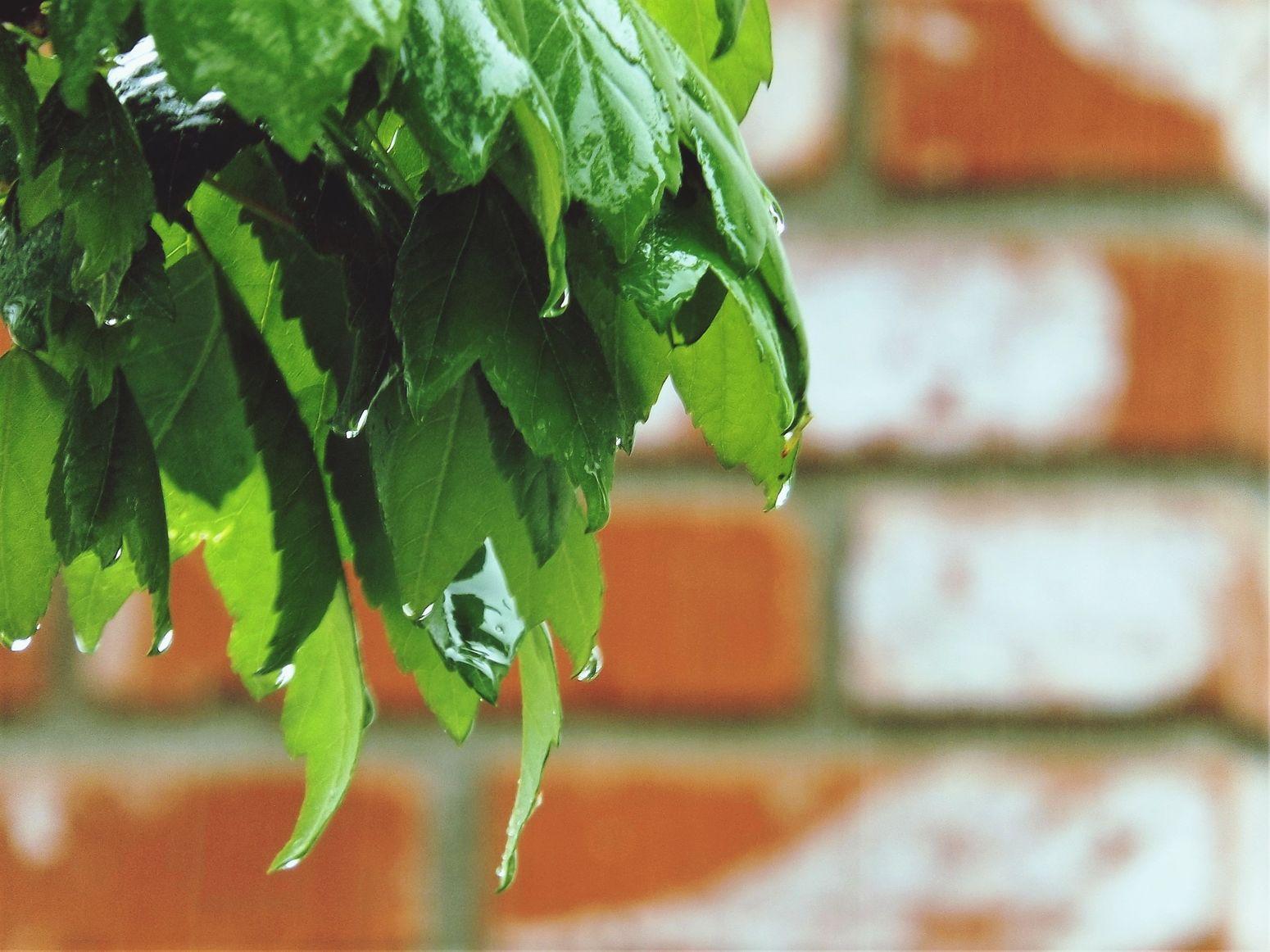 Wet Leaves Rainy Days Rainy Days☔ Rain Rain
