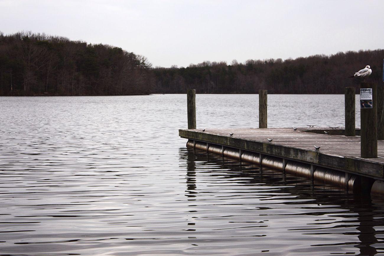 Burke Lake Park Burke Lake Calm Water Nature Photography At The Lake Boat Dock
