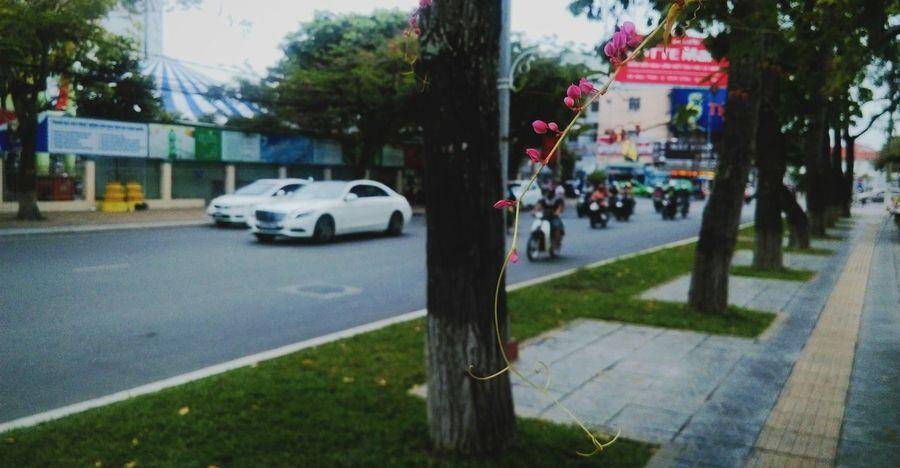 Flowers Flower Collection EyeEm Nature Lover Street Park Mobile Photography VSCO Vscocam